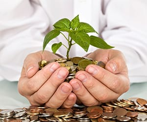 Hands cupped together holding a small tree rooted in a bed of coins